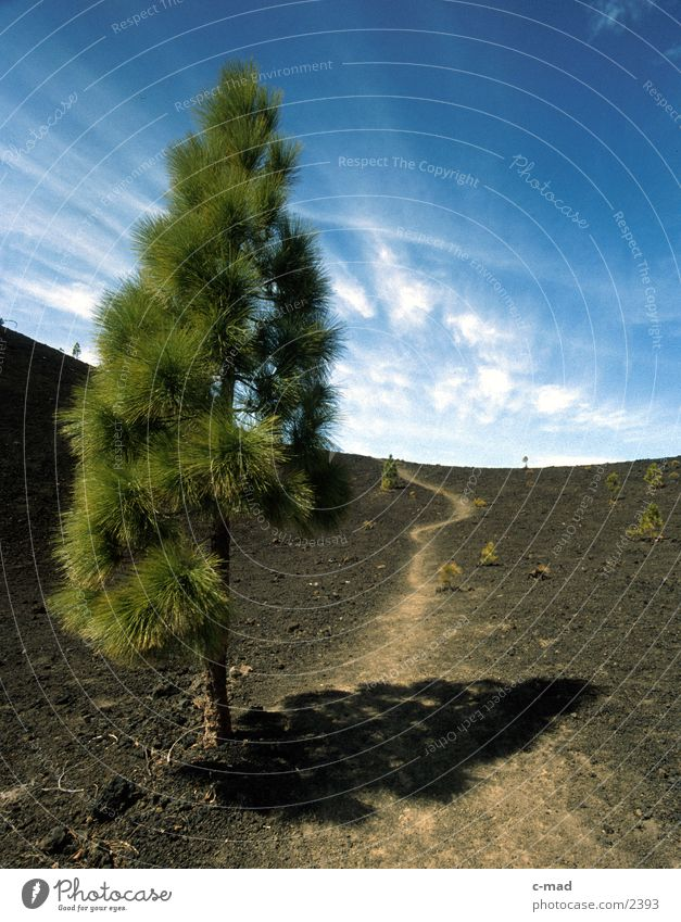 Teneriffa - Baum a. Pico de Teide Wolken Farbe Wege & Pfade Horizont Europa Spanien Vulkan Kiefer