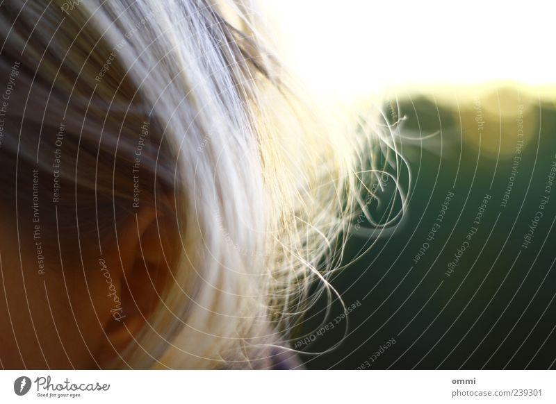 Haarscharf Haare & Frisuren Ohr 1 Mensch Sonnenlicht blond authentisch einfach schön ästhetisch Farbfoto Gedeckte Farben Außenaufnahme Detailaufnahme