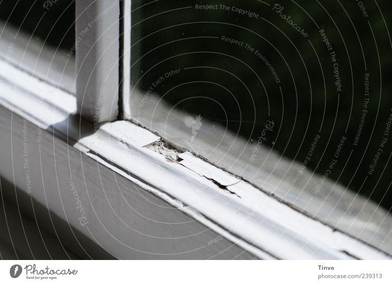 Fenster Haus alt grau schwarz weiß Anstrich Fensterrahmen Gebäudeteil Sprossenfenster abblättern verfallen Innenaufnahme Menschenleer Textfreiraum rechts Licht