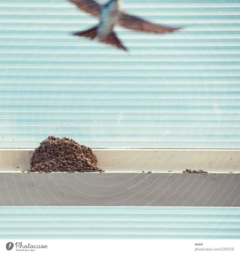 Flugshow Tier Bewegung Linie fliegen Vogel wild Wildtier Feder Streifen Dach Kunststoff tierisch fliegend Vogelflug hell-blau Nest