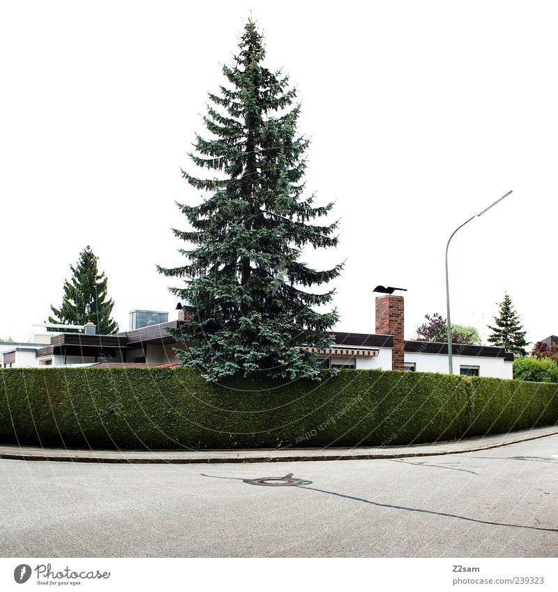 o tannenbaum... Haus Baum Sträucher Hecke Verkehrswege Straße einfach rund grün Symmetrie Wohnsiedlung Laterne Tanne Nadelbaum Kurve Außenaufnahme Tag