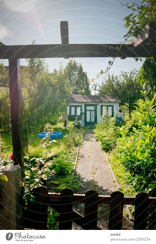 Grün, blau und freundlich Pflanze Sommer Baum Blume Blatt Blüte Wege & Pfade Holz Gras Garten leuchten Tür Wachstum Idylle Sträucher Blühend