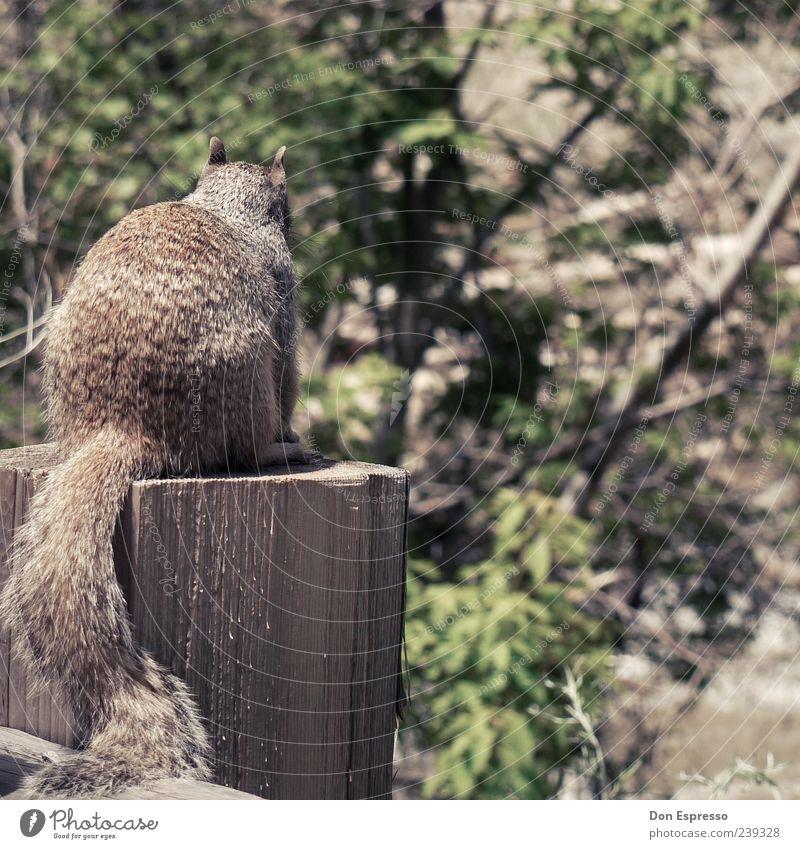 Sandy C. Natur schön Tier Holz klein Wildtier sitzen natürlich niedlich Rücken retro weich Fell nah kuschlig Schwanz