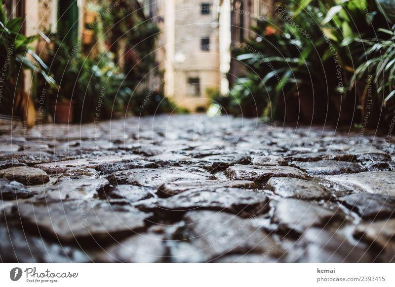 Gassenblick Zufriedenheit Erholung ruhig Freizeit & Hobby Ferien & Urlaub & Reisen Tourismus Ausflug Freiheit Sommer Sommerurlaub Sonne Pflanze Mallorca