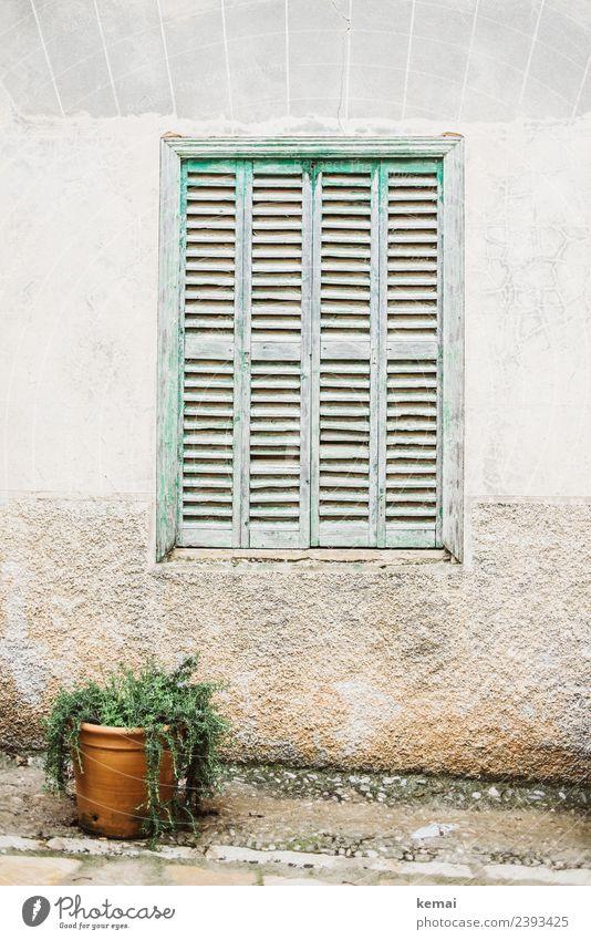 Fenster Lifestyle Stil harmonisch Wohlgefühl Zufriedenheit Erholung ruhig Ferien & Urlaub & Reisen Ausflug Sommerurlaub Häusliches Leben Topfpflanze Mauer Wand