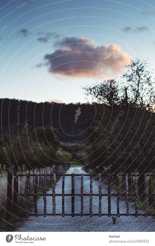Mandelplantage Himmel Ferien & Urlaub & Reisen Natur Sommer Pflanze Landschaft Baum Wolken ruhig dunkel Wege & Pfade Freiheit Feld Abenteuer authentisch