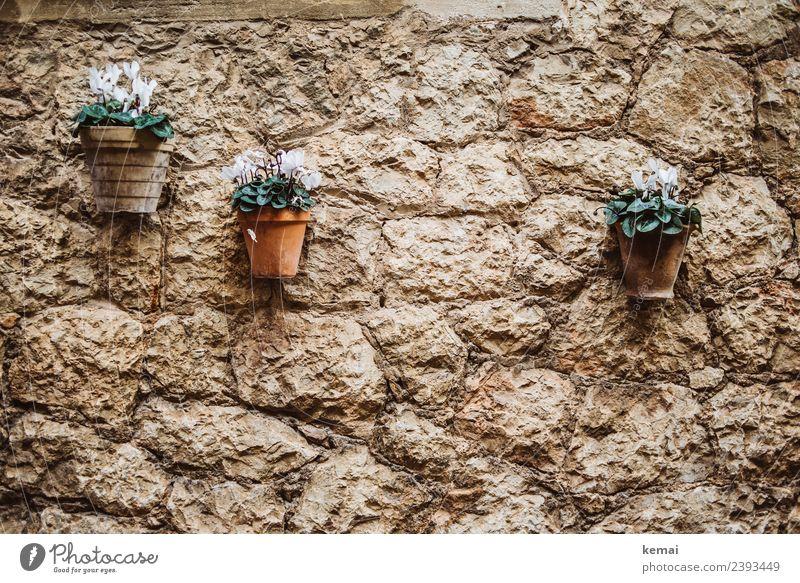 Blumentöpfe an der Wand Pflanze schön Mauer Tourismus Fassade Häusliches Leben Ausflug Dekoration & Verzierung authentisch Fröhlichkeit einzigartig Sommerurlaub