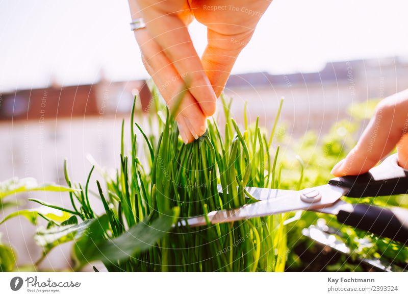 Junge Frau schneidet frischen Schnittlauch Mensch Natur Pflanze Sommer Gesunde Ernährung Stadt Hand Erwachsene Wärme Gesundheit Umwelt natürlich