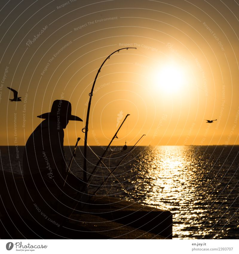 relaxen Freizeit & Hobby Angeln Ferien & Urlaub & Reisen Mann Erwachsene 1 Mensch Himmel Horizont Sonne Sonnenaufgang Sonnenuntergang Sommer Meer Florida USA