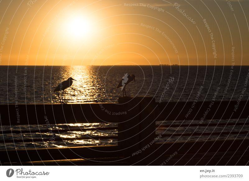 gleich Feierabend Natur Ferien & Urlaub & Reisen Sommer Landschaft Sonne Meer Tier ruhig Ferne Wärme gelb Vogel orange Horizont gold Idylle