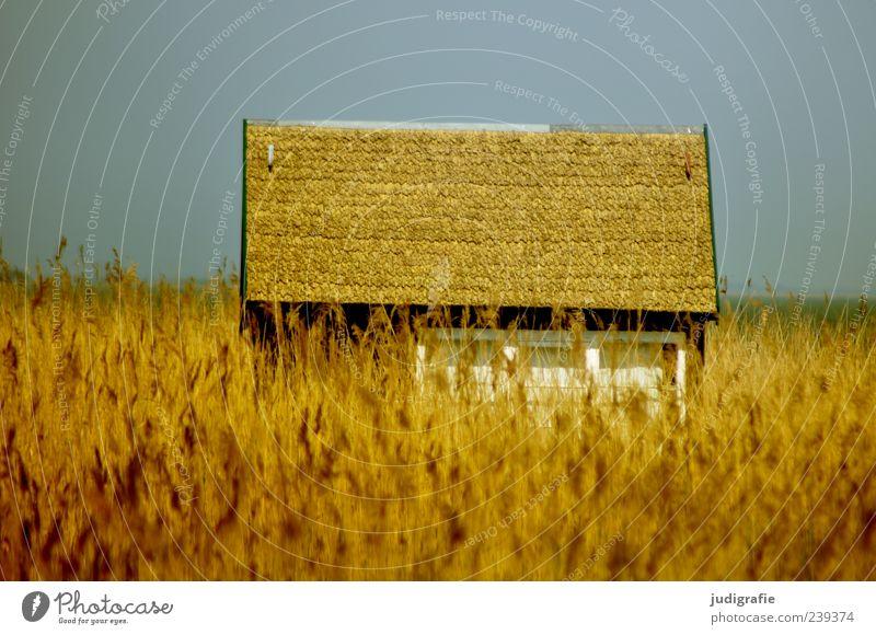 Am Bodden Himmel Natur Pflanze Sommer ruhig Haus Umwelt Landschaft Küste Gebäude Stimmung Feld gold außergewöhnlich natürlich Häusliches Leben