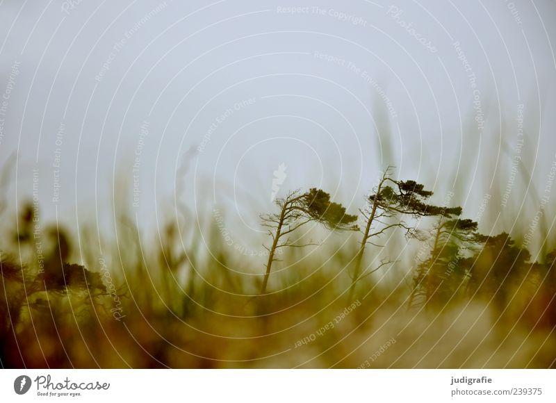 Weststrand Himmel Natur Baum Pflanze Meer Umwelt Landschaft kalt Gras Küste Wind Klima wild natürlich Ostsee Textfreiraum