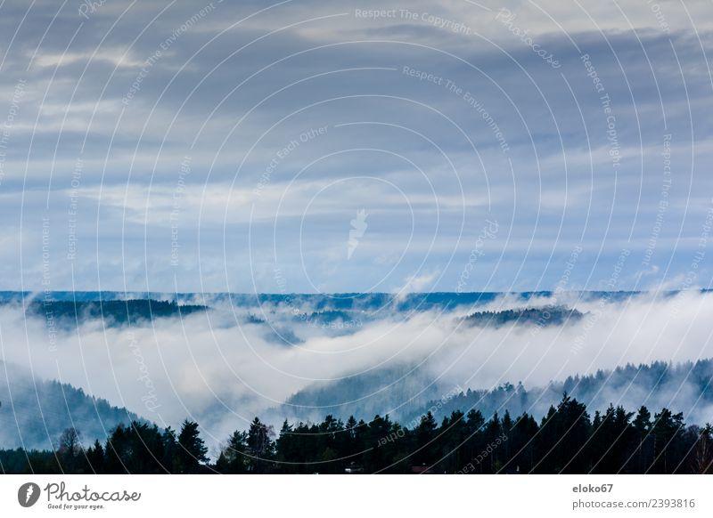 Landschaft im Nebel Natur Liebe Schwimmen & Baden liegen sitzen Lächeln fallen Jagd machen atmen Tauziehen
