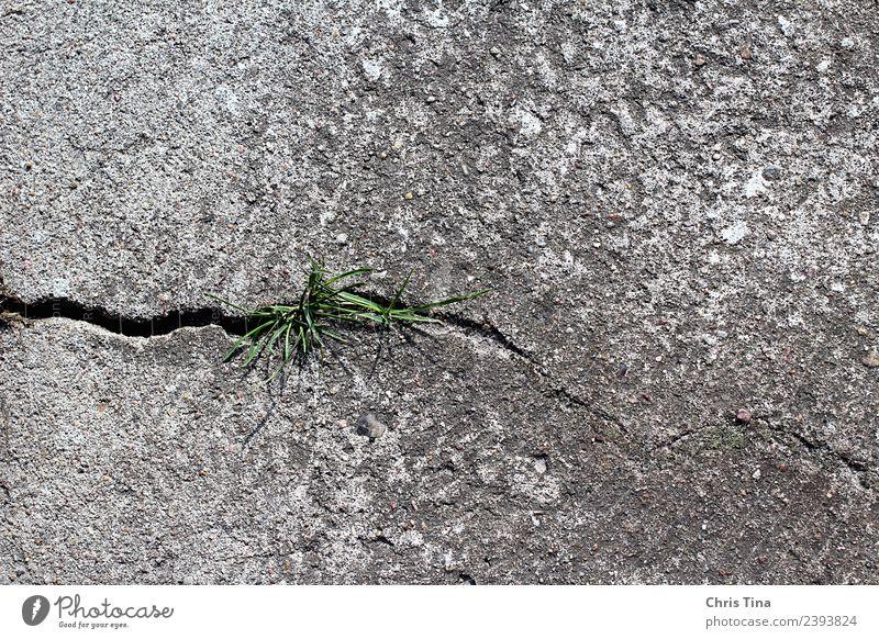 Etwas Grünes im Grauen Natur Pflanze Erde Gras Stein Beton beobachten Wachstum grau grün bescheiden Beginn Umwelt Farbfoto Außenaufnahme Nahaufnahme