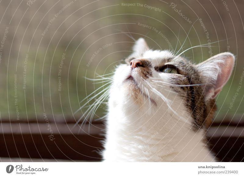 sonnen.lotta Umwelt Tier Haustier Katze 1 beobachten natürlich niedlich grün Katzenkopf Schnurrhaar Sonnenbad Textfreiraum links Textfreiraum oben Farbfoto