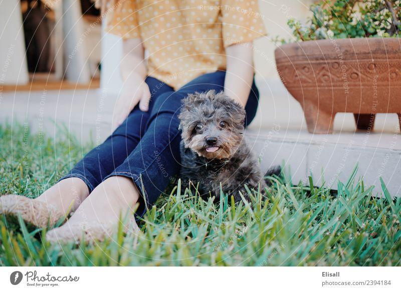 Frau Mensch Natur Hund Pflanze Tier Freude Erwachsene Lifestyle Frühling Gefühle Gras Glück Garten Zusammensein Stimmung