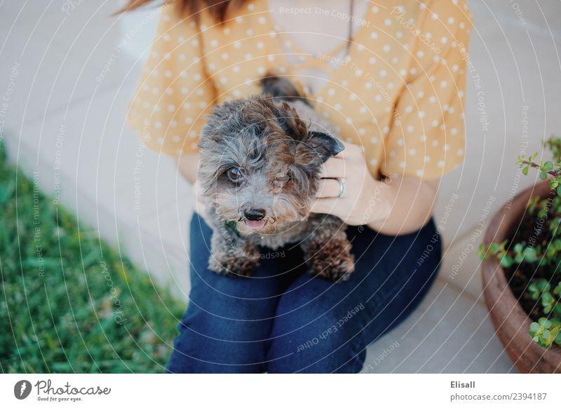 Frau mit Haushund Lifestyle Mensch Junge Frau Jugendliche Erwachsene Mutter 1 18-30 Jahre Tier Haustier Hund Fröhlichkeit Begeisterung Partnerschaft Frühling