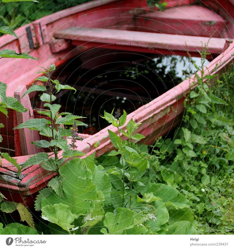 verkehrte Welt... Natur grün rot Pflanze Blatt Einsamkeit schwarz ruhig Umwelt Wiese Frühling Freizeit & Hobby außergewöhnlich natürlich nass Ausflug