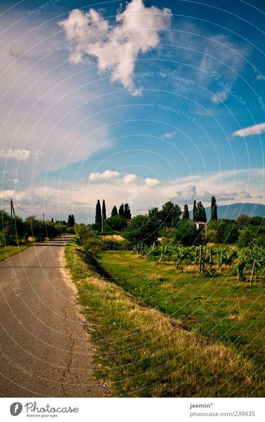 Toskanische Wege Himmel Natur Baum Pflanze Sommer Wolken Umwelt Landschaft Wiese Berge u. Gebirge Gras Wege & Pfade Glück Wetter Zufriedenheit Fröhlichkeit