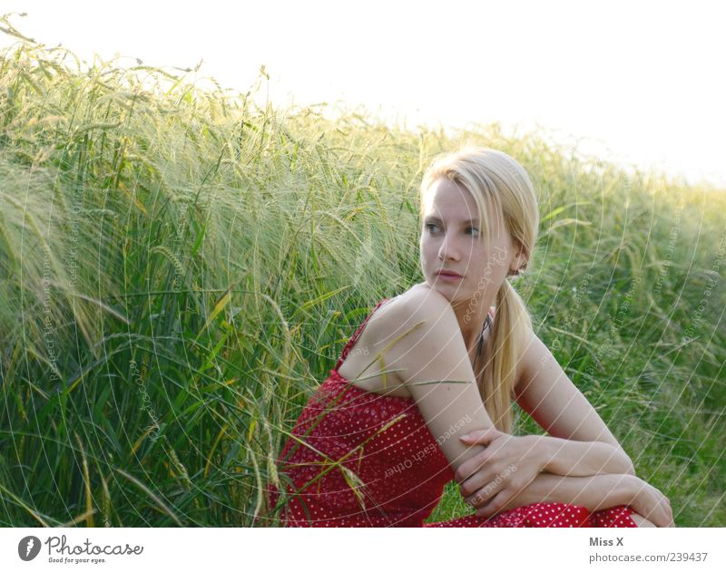 im Sonnenlicht Mensch Jugendliche schön Pflanze Sommer ruhig Erwachsene Erholung feminin Gras Junge Frau blond Feld sitzen 18-30 Jahre Kleid
