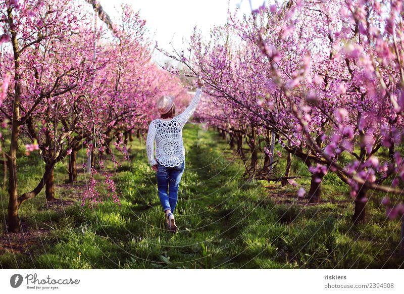 in love with the peaches iii Frau Mensch Natur Erholung ruhig Erwachsene Leben Umwelt Frühling natürlich feminin Glück Garten Zufriedenheit träumen frei