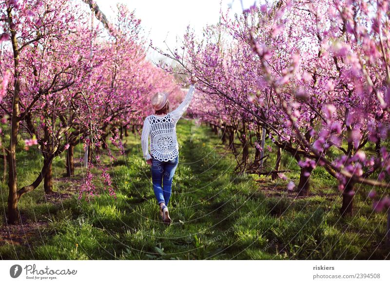 in love with the peaches iii Mensch feminin Frau Erwachsene Leben 1 30-45 Jahre Umwelt Natur Frühling Schönes Wetter Pfirsichblüten Garten entdecken Erholung