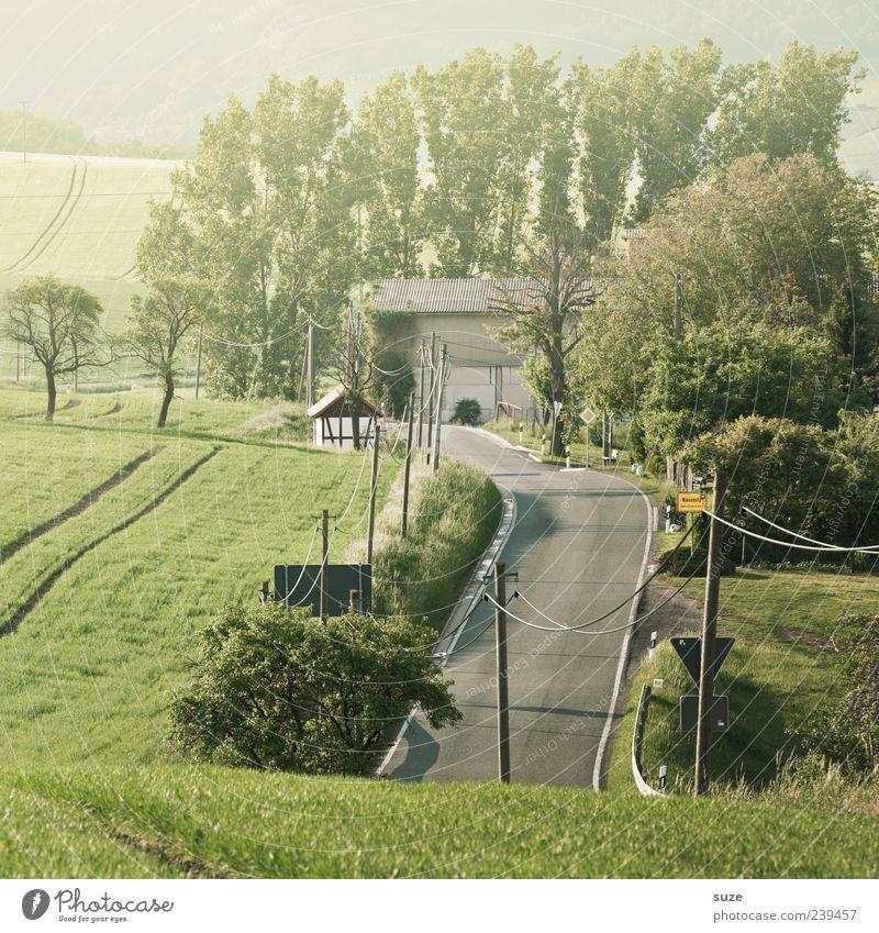 Ortseingang Umwelt Natur Landschaft Wetter Schönes Wetter Baum Sträucher Wiese Feld Straße Wege & Pfade Landstraße authentisch schön grün Ziel Strommast