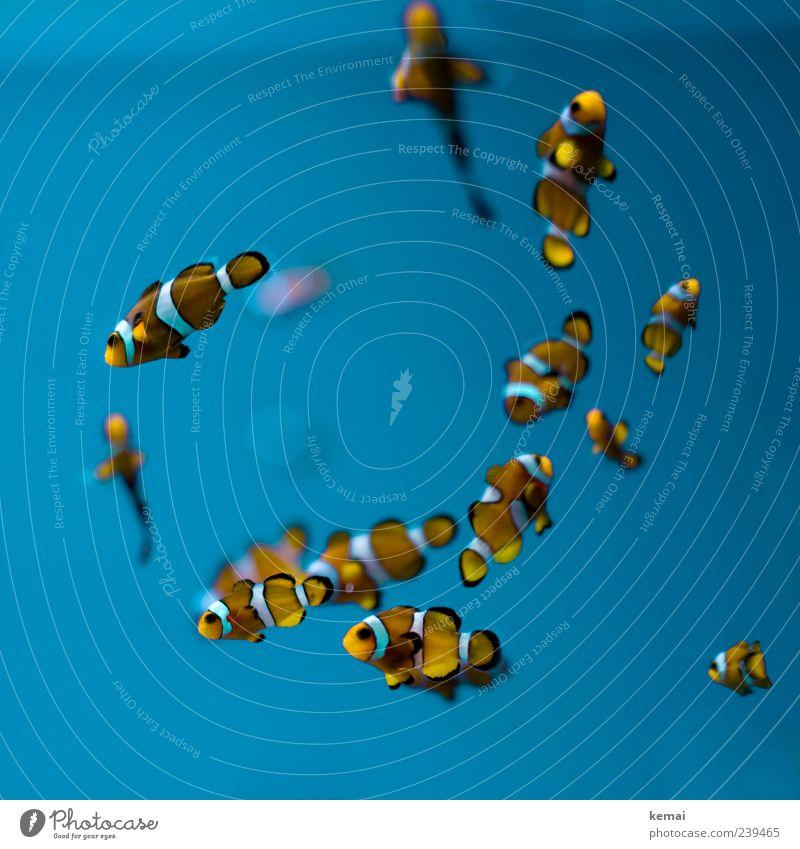 Fischla Natur blau Wasser Tier Umwelt kalt klein orange Wildtier leuchten Tiergruppe niedlich viele Tiergesicht Unterwasseraufnahme