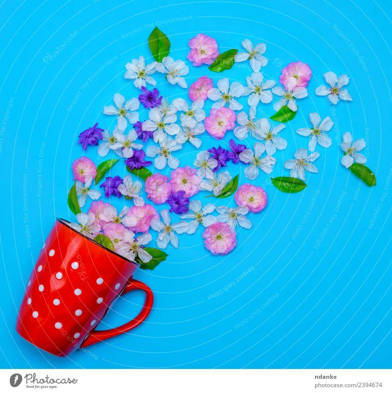 Natur Pflanze blau Sommer Farbe grün weiß Blume rot rosa oben Aussicht frisch Kreativität Blühend Kaffee