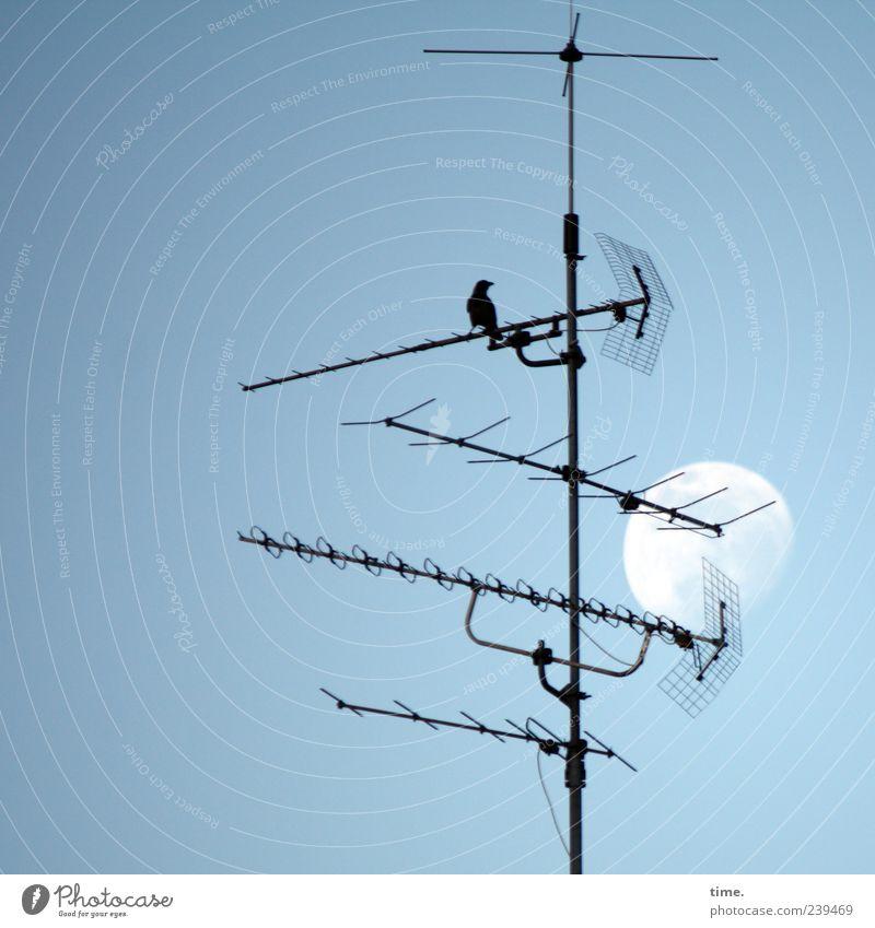 Eine kleine Nachtmusik Himmel Tier Metall Vogel ästhetisch Technik & Technologie Mond Antenne Sender Amsel
