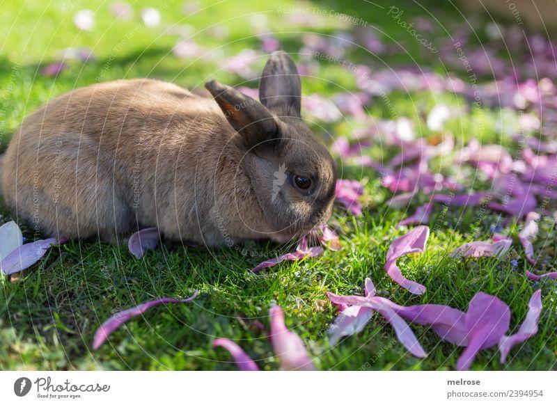 mampf mampf Natur Sommer Schönes Wetter Pflanze Baum Gras Blüte Magnolienblätter Wiese Garten Tier Tiergesicht Fell Hase & Kaninchen Säugetier Nagetiere