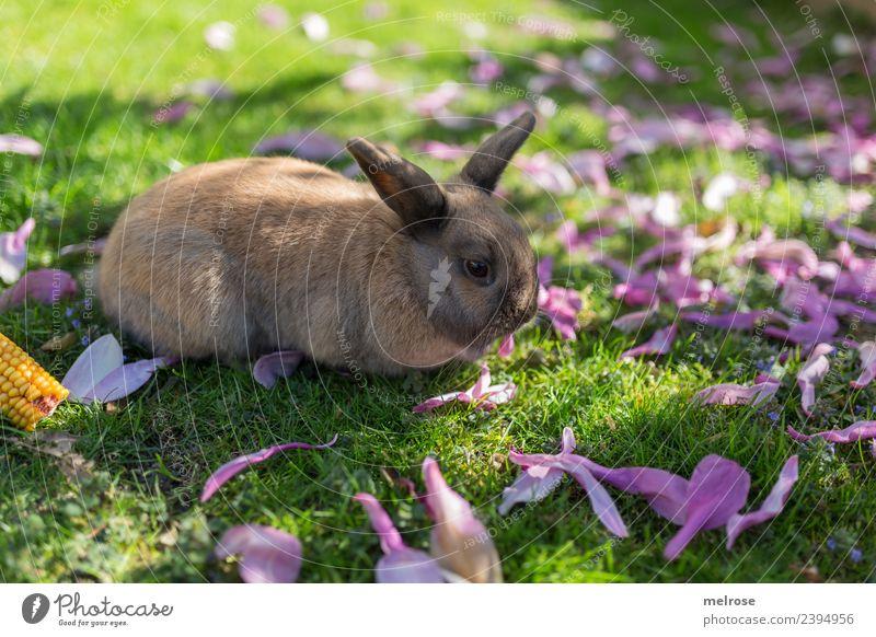 Zwergkanninchen I Natur grün Erholung Tier Gras Garten braun Zufriedenheit niedlich Freundlichkeit Pause weich violett Gelassenheit Fell Säugetier