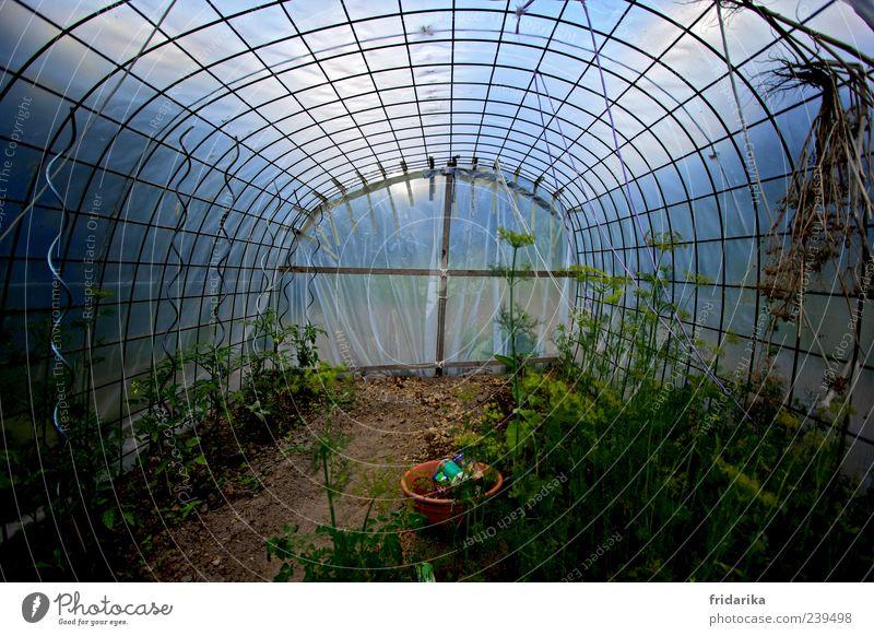 Treibhaus Himmel blau grün Pflanze Garten braun Wachstum Gemüse Blühend Bioprodukte Tomate Gewächshaus Nutzpflanze Setzling Licht Baumschule