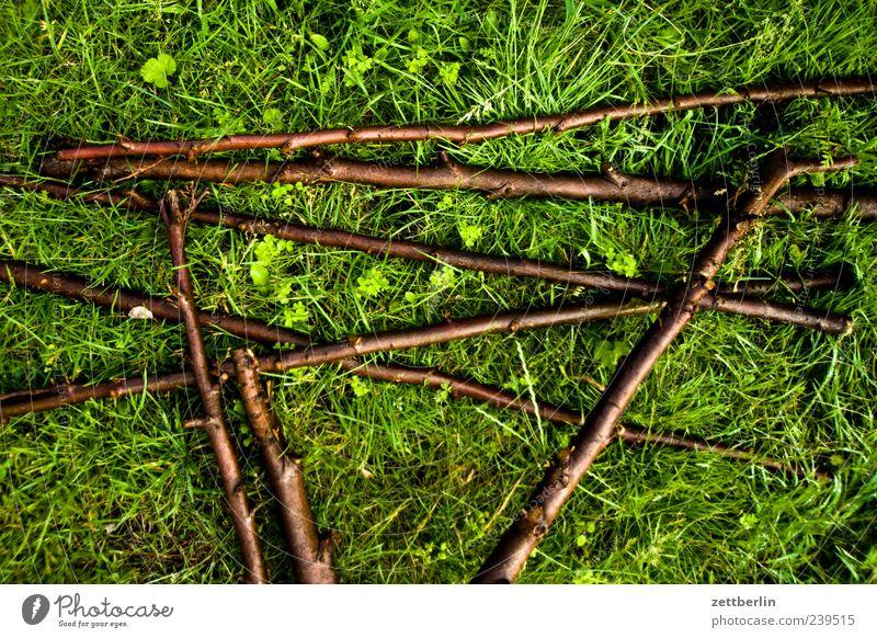 Mikado für Fortgeschrittene grün Pflanze Wiese Gras liegen Wachstum Ast Rasen Zweig durcheinander Stock saftig Zweige u. Äste Blattgrün aufeinander