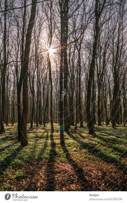 Waldblick Natur Erde Himmel Sonne Frühling Pflanze Baum Blume Gras Moos Wildpflanze Anemonen authentisch frisch Wärme Frühlingsgefühle Optimismus Gelassenheit
