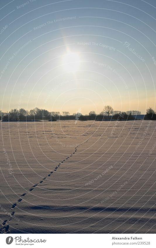 Auf und davon. Umwelt Natur Landschaft Urelemente Himmel Wolkenloser Himmel Sonne Sonnenlicht Winter Klima Wetter Schönes Wetter Schnee Feld Flucht Schneedecke