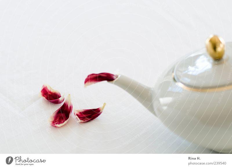 First Flush Tee Teekanne Tulpe rot weiß Blütenblatt Tulpenblätter Farbfoto Innenaufnahme Menschenleer Textfreiraum links Textfreiraum oben