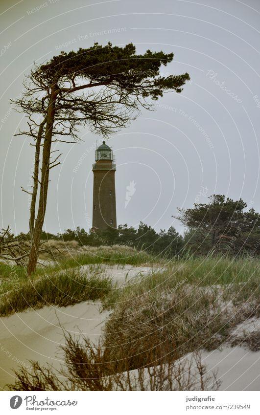 Darßer Ort Umwelt Natur Landschaft Pflanze Himmel Baum Gras Küste Strand Ostsee Meer darßer ort Prerow Leuchtturm natürlich wild Stimmung Windflüchter