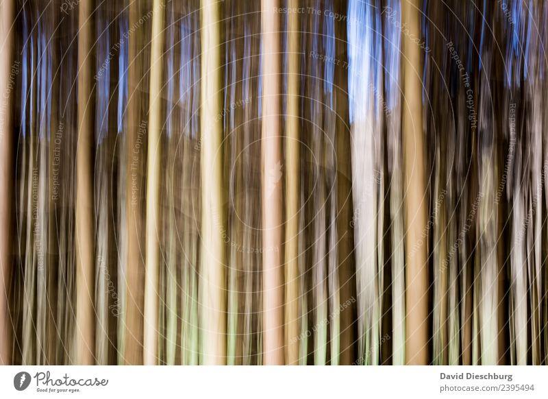 Wald in Bewegung Natur Pflanze Tier Frühling Sommer Schönes Wetter Baum Grünpflanze Urwald blau braun gelb grau grün schwarz weiß Linie Querformat
