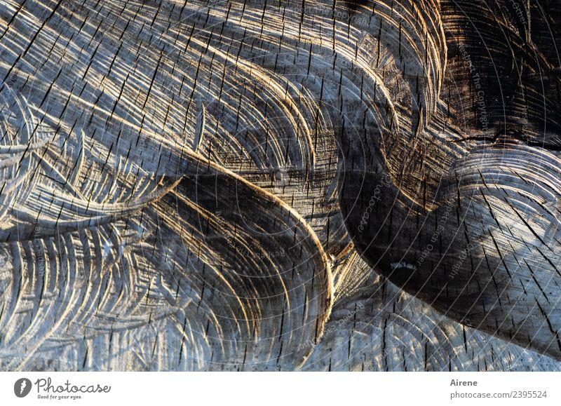 Fällstudie Landwirtschaft Forstwirtschaft Baum Baumstamm Baumstumpf Echter Walnussbaum Holz Zeichen Ornament Linie schwungvoll Kreis rund Kerben Furche braun