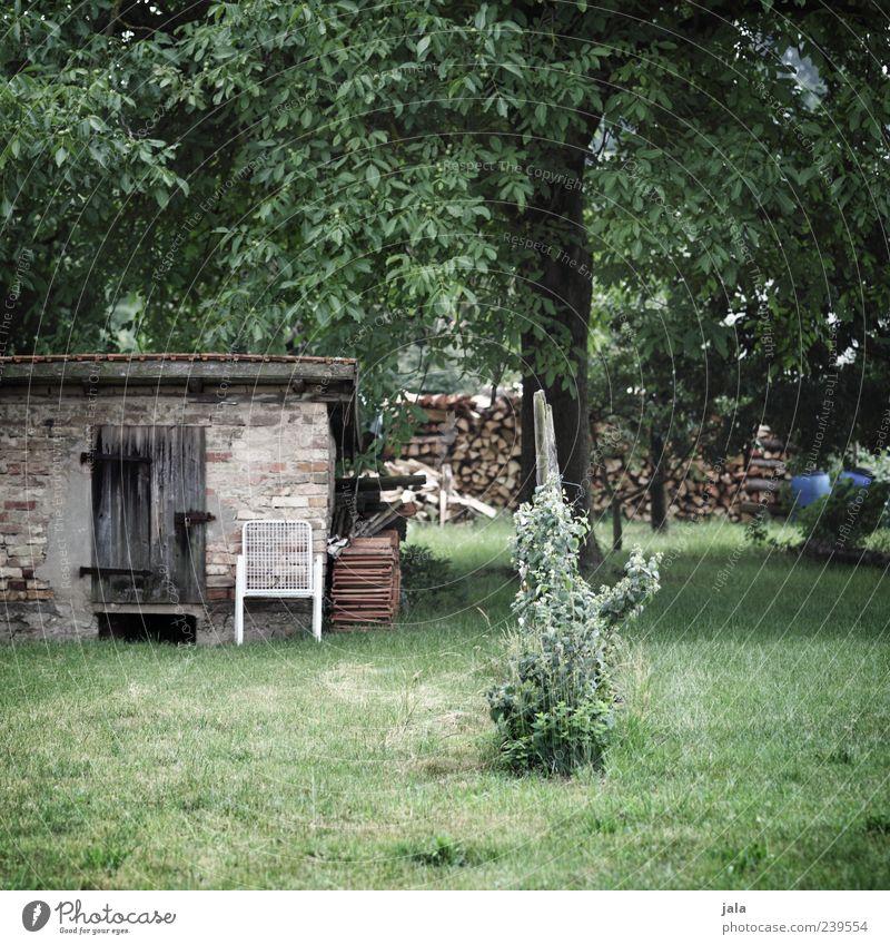 garten Stuhl Natur Pflanze Baum Gras Sträucher Grünpflanze Wildpflanze Garten Wiese Hütte Bauwerk Gebäude grün Farbfoto Außenaufnahme Menschenleer Tag