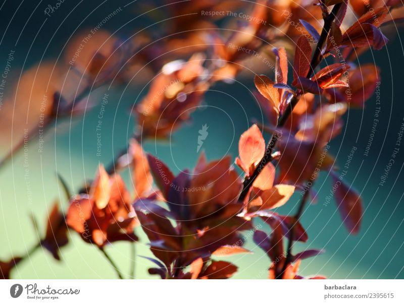Jahreszeiten: Frühlingserwachen Natur Pflanze Sonne Klima Sträucher Blatt Garten leuchten Wärme blau rot Stimmung Frühlingsgefühle Vorfreude Farbe Umwelt
