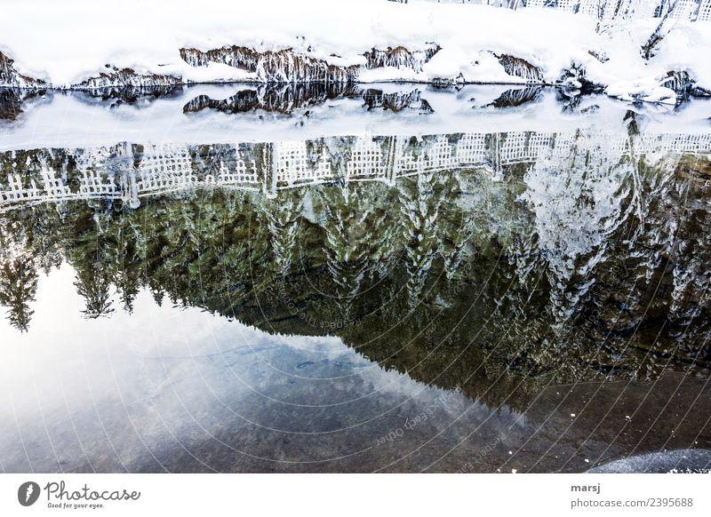 Noch ein bisschen Winterzauber Leben ruhig Winterurlaub Natur Schönes Wetter Eis Frost Schnee Bach Hoffnung träumen Trauer Vergänglichkeit Irritation