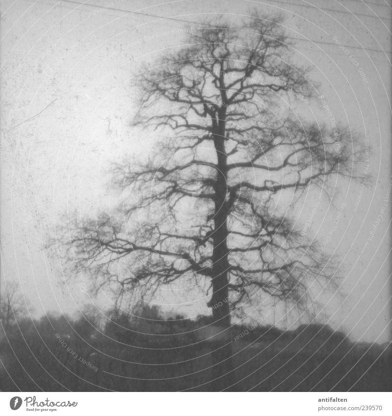 Die alte Heimat Himmel Natur weiß Baum Pflanze schwarz Umwelt Landschaft dunkel Gefühle grau Luft natürlich ästhetisch Urelemente