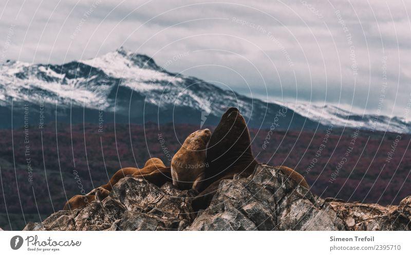 Robben in Patagonien Abenteuer Ferne Freiheit Expedition Berge u. Gebirge Landschaft Wolken Herbst Schnee Felsen Anden Schneebedeckte Gipfel Feuerland Ushuaia