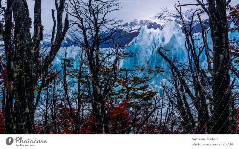 Perito Moreno II Tourismus Abenteuer Ferne Freiheit Expedition Winter Argentinien Landschaft Urelemente Herbst Eis Frost Schnee Baum Wald Berge u. Gebirge