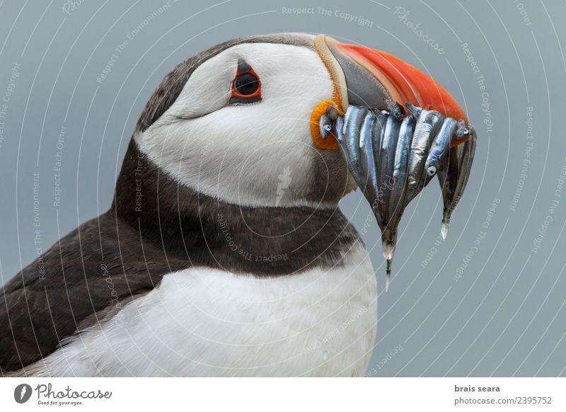 Natur Ferien & Urlaub & Reisen blau Sommer schön Wasser weiß Meer Tier schwarz Essen Umwelt Küste Vogel orange wild