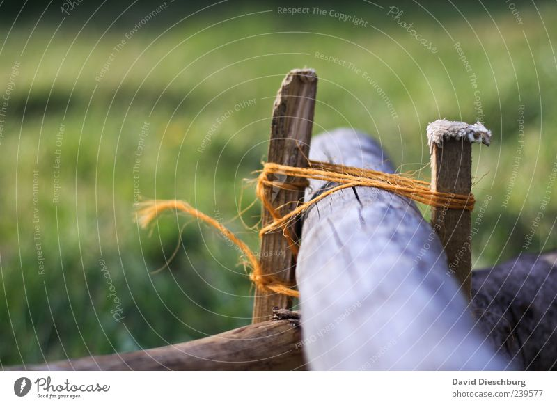 Knotentechnik Holz grün Seil festhalten gebunden Farbfoto Außenaufnahme Detailaufnahme Tag Licht Unschärfe Schnur Holzpfahl Menschenleer Halt Zentralperspektive