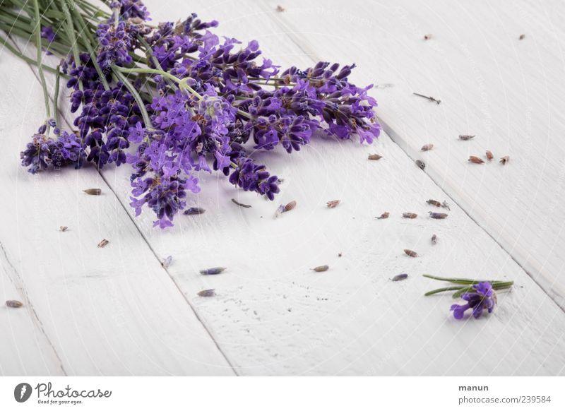 Lavendel Kräuter & Gewürze Heilpflanzen Gesundheit Duft Tisch Holztisch Natur Pflanze Blume Blüte Nutzpflanze Sommerblumen Blütenstiel liegen authentisch frisch