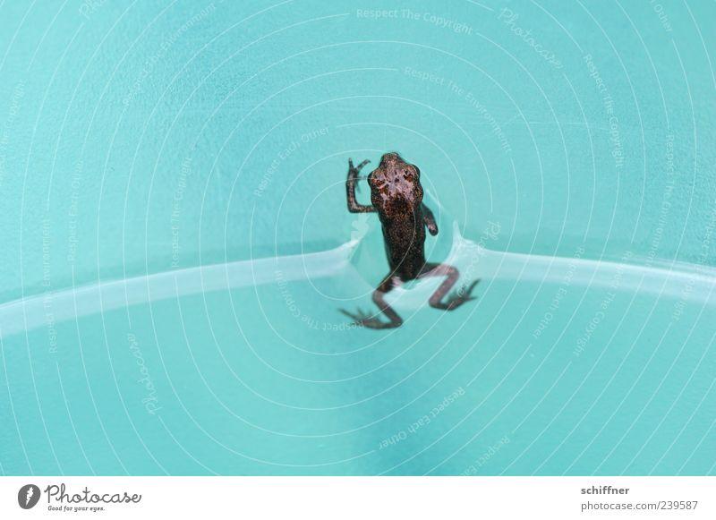 Huhu! Wasser schön Tier klein Tierjunges Beine braun türkis Frosch Wasseroberfläche Lurch Naturphänomene winzig Makroaufnahme Luftholen Oberflächenspannung
